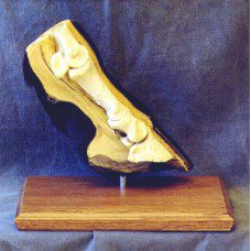 Horse Sense Basic 3D Hoof with Magnets and Colored Hoof